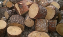 Дрова сосновые не колотые