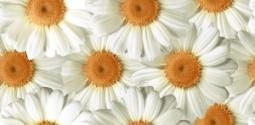 Декор Нефрит-керамика Элегия 07-00-5-08-00-23-505 40x20 Белый