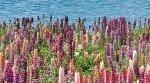 Декор Ceradim Forest Dec Flora 25x45